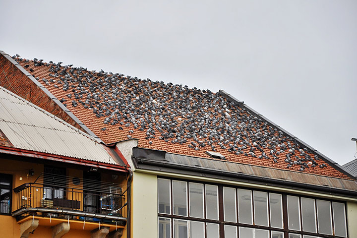 A2B Pest Control are able to install spikes to deter birds from roofs in Stanmore.