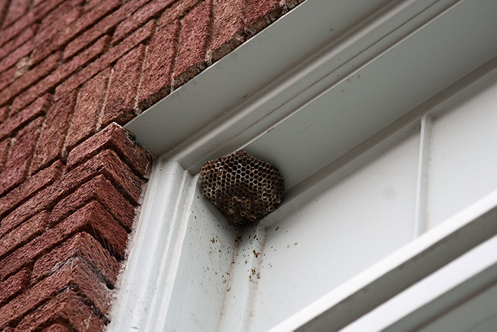We provide a wasp nest removal service for domestic and commercial properties in Stanmore.